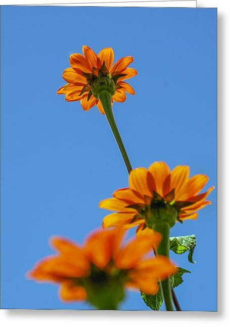 Orange Flowers On Blue Sky Greeting Card by Debbie Karnes