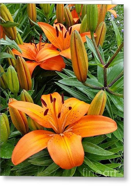 Greeting Card featuring the photograph Orange Flowers by Rose Wang