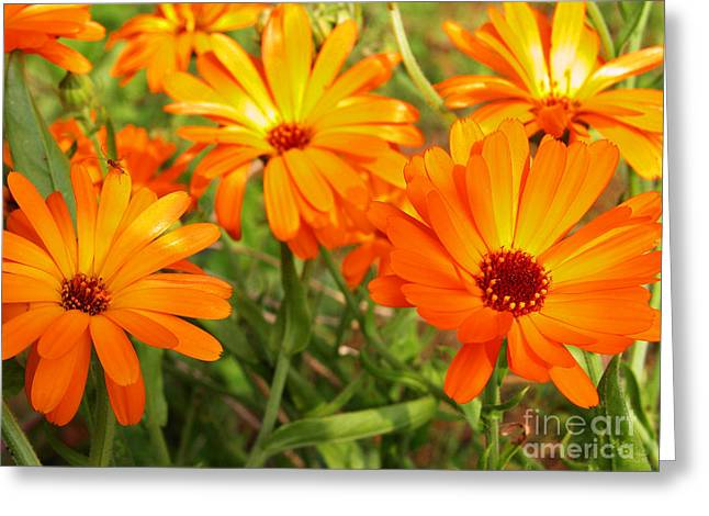 Orange Flowers Greeting Card by Thomas R Fletcher