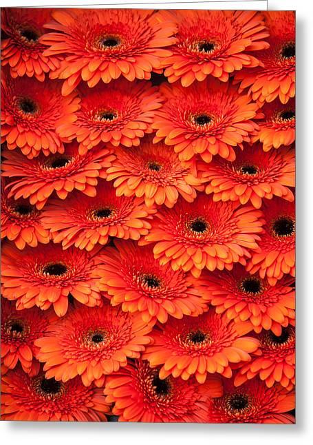 Orange Gerbera. Amsterdam Flower Market Greeting Card by Jenny Rainbow