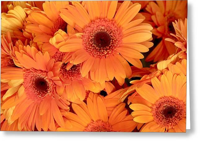 Orange Gerbera Daisies Greeting Card by Art Block Collections