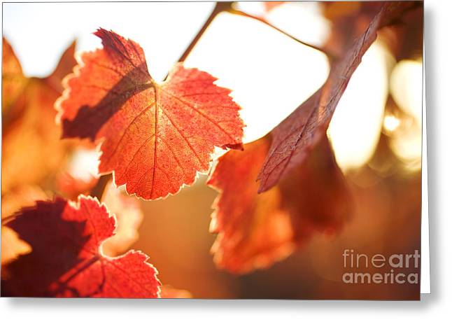 Orange Grapevine Leaves Greeting Card by Charmian Vistaunet