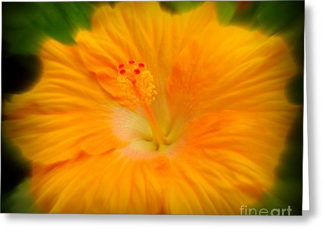 Orange Hibiscus Flower Greeting Card by Clare Bevan