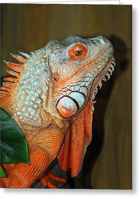 Greeting Card featuring the photograph Orange Iguana by Patrick Witz