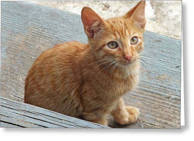 Orange Kitten 2 At The Front Porch Greeting Card