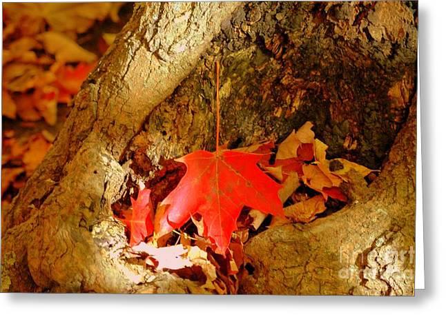 Orange Leaf Greeting Card by Kathleen Struckle