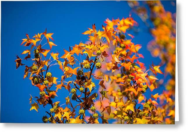 Orange Leaves Greeting Card by Mike Lee