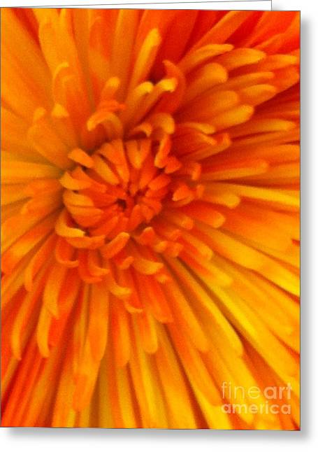 Orange Light Greeting Card
