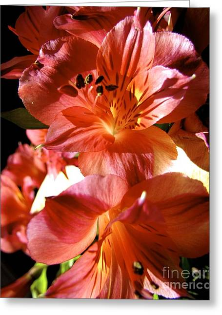 Orange Lilies Greeting Card