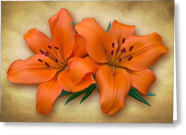 Orange Lily Greeting Card by Jane McIlroy