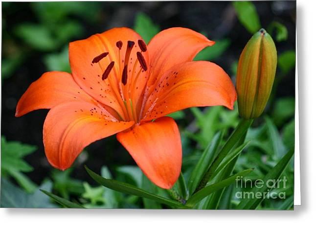 Orange Lily Greeting Card by Susanne Baumann