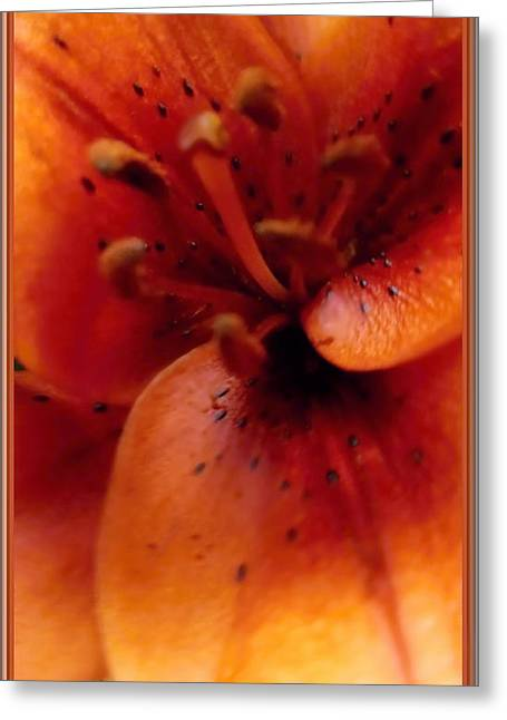 Orange Macro Modern Lily Greeting Card by Danielle  Parent