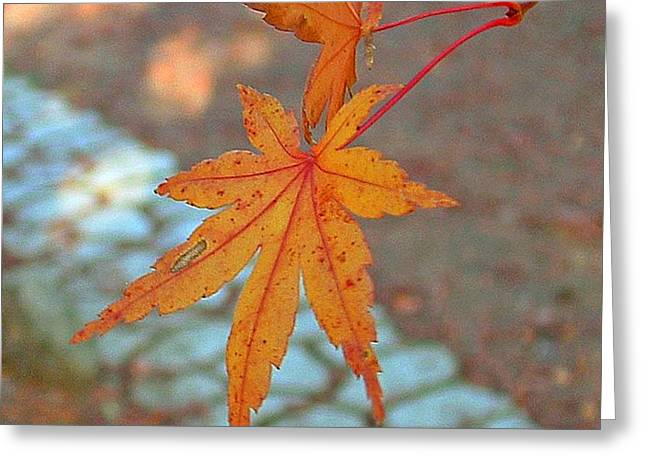 Orange Maple Leaves Greeting Card by Lorna Hooper