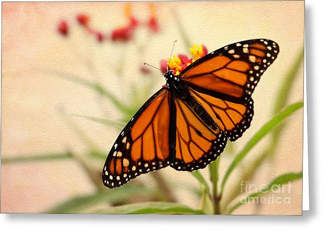 Orange Mariposa Greeting Card by Sabrina L Ryan