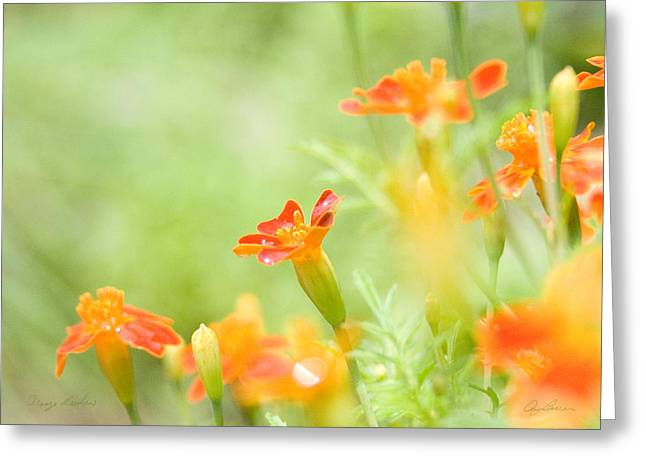 Orange Meadow Greeting Card