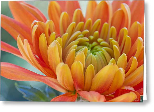 Orange Mum Closeup Greeting Card