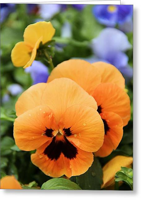 Greeting Card featuring the photograph Orange Pansies by Elizabeth Budd