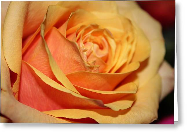 Greeting Card featuring the photograph Orange Passion by Judy Palkimas