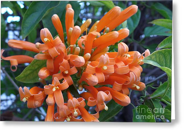 Orange Petals Greeting Card