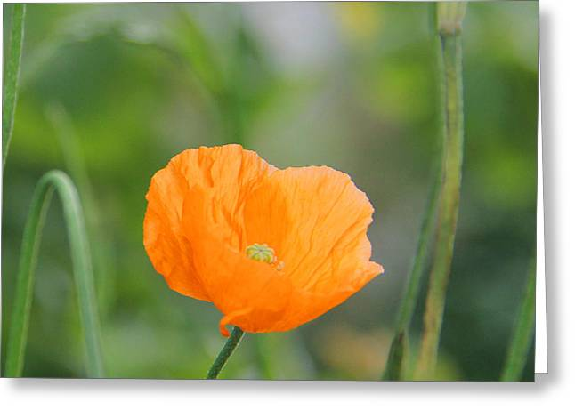 Orange Poppy #2 Greeting Card by Karin Ubeleis-Jones