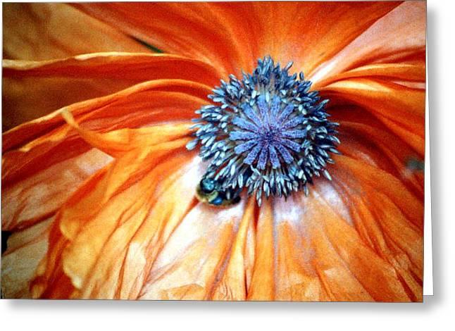 Orange Poppy Close-up Greeting Card