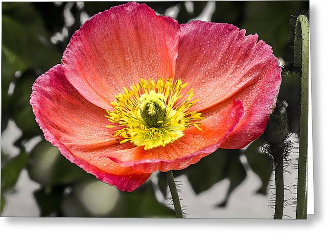 Greeting Card featuring the digital art Orange Poppy by Photographic Art by Russel Ray Photos