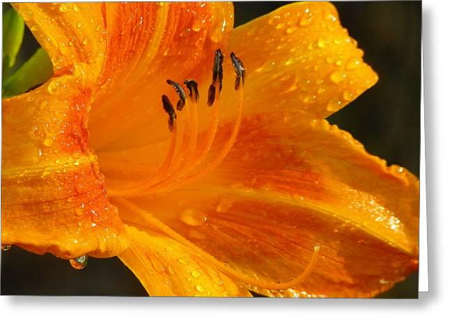 Orange Rain Greeting Card by Karen Wiles