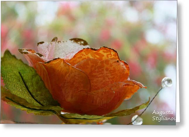 Orange Rose Greeting Card by Augusta Stylianou