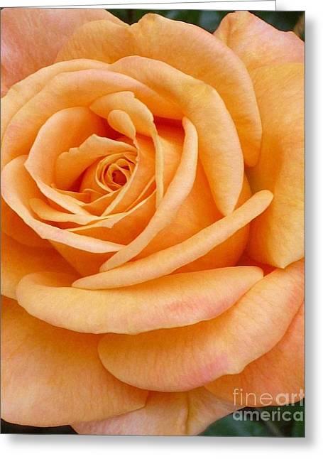 Orange Rose Blossom Special Greeting Card