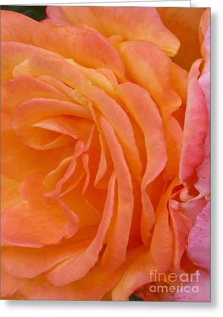 Orange Rose Swirl Greeting Card