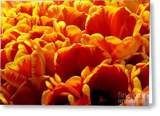 Orange Sea Greeting Card by Lauren Leigh Hunter Fine Art Photography
