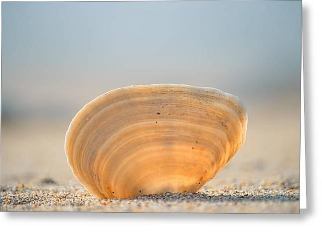 Orange Seashell On Beige Sand Against Blue Ocean Greeting Card