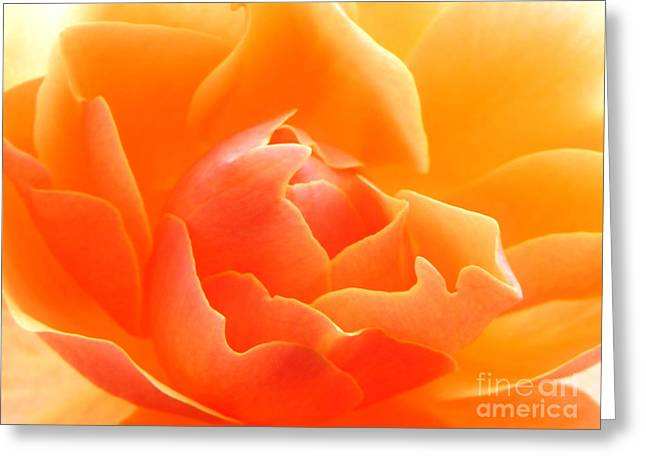 Orange Sherbet Greeting Card