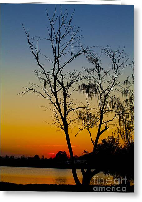 Orange Silhouette   Greeting Card by Andrew Wood