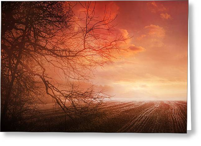 Orange Sunrise On Field Greeting Card by Dorothy Walker