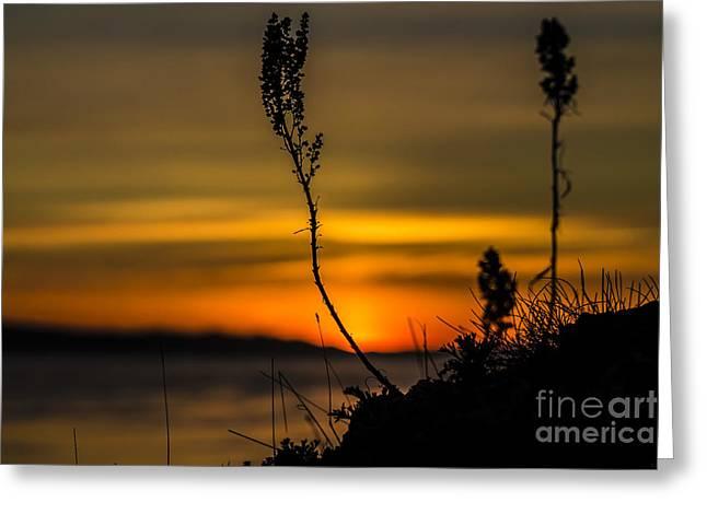 Orange Sunset Greeting Card by Arlene Sundby