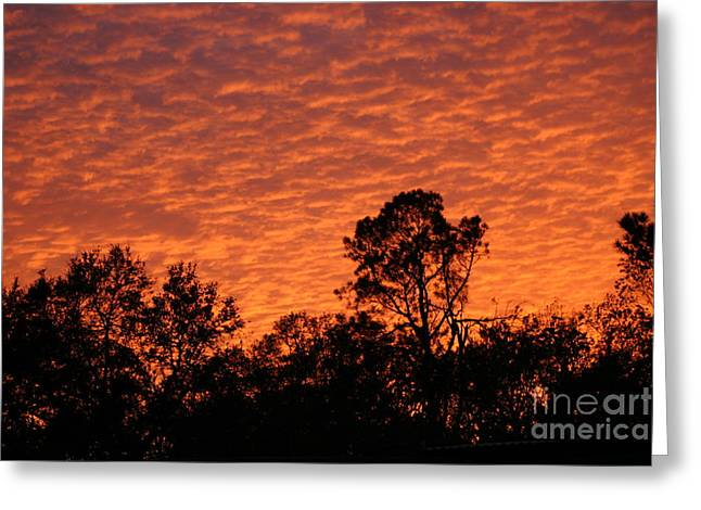 Orange Sunset Greeting Card by D Wallace