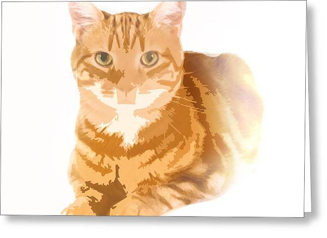 Orange Tabby Greeting Card by Steve Huang