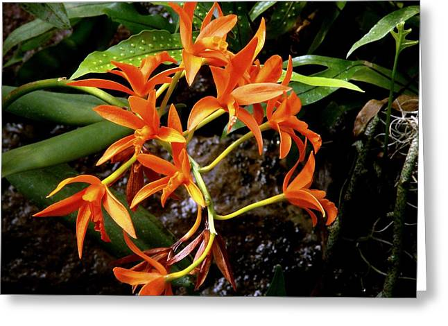 Orange Tendrils Greeting Card by Rodney Lee Williams