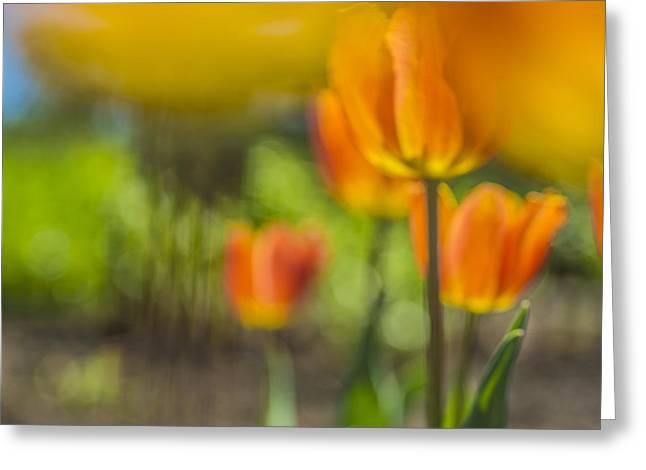 Orange Tulip On Fire Greeting Card by Arkady Kunysz