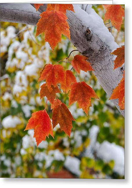 Greeting Card featuring the photograph Orange White And Green by Ronda Kimbrow
