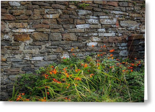 Orange Wildflowers Against Stone Wall Greeting Card
