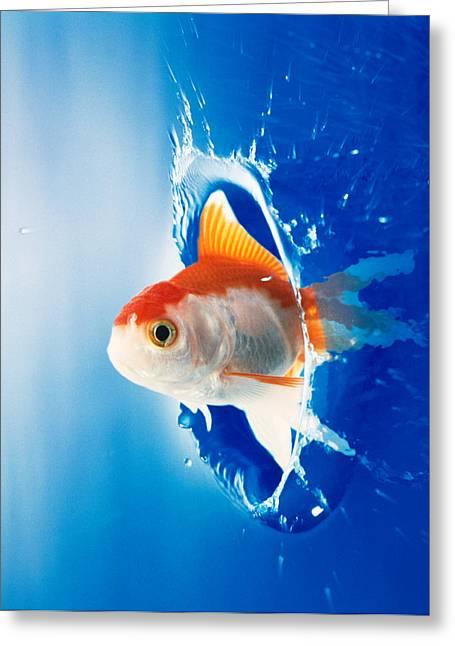 Orange, Yellow And White Fish Flying Greeting Card