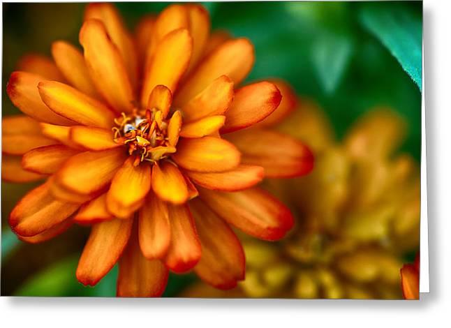 Orange You Glad You're A Flower Greeting Card by Sennie Pierson