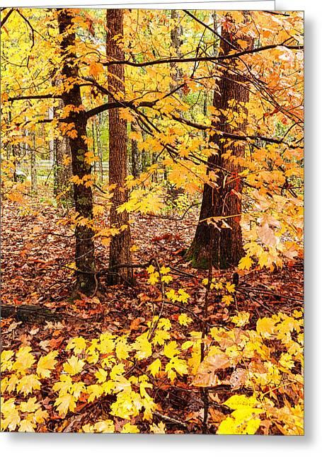 Orange Zen - Beaver's Bend State Park - Broken Bow Oklahoma Greeting Card