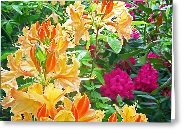 Pretty Flowers Greeting Cards - Orangeburst Greeting Card by Aimee L Maher Photography and Art