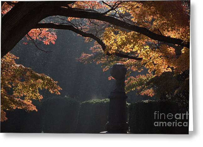 Greeting Card featuring the photograph Orangish by Steven Macanka