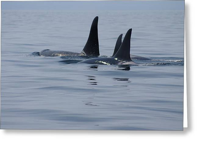 Orca Family Greeting Card