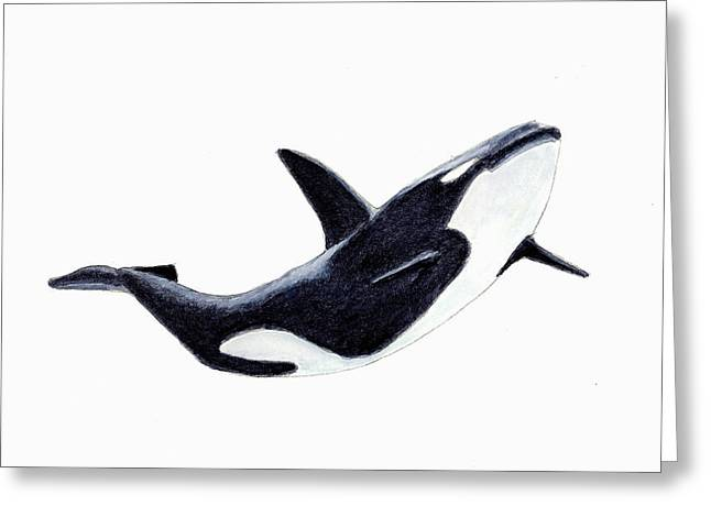 Orca - Killer Whale Greeting Card