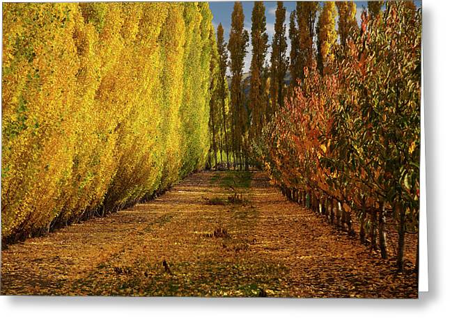 Orchard In Autumn, Ripponvale Greeting Card by David Wall